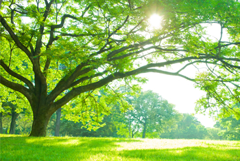 Parthemore funeral home cremation services inc new for Facts about going green